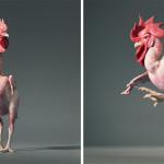 Vặt sạch lông 2-3 con gà vịt chỉ trong 40s, bạn đã biết cách chưa