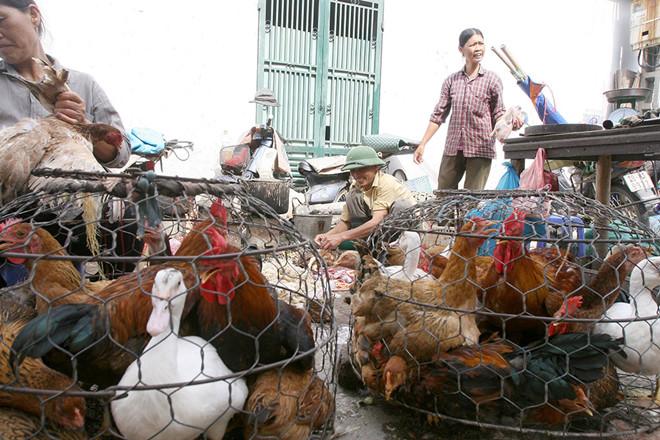 Bán gà vịt quy mô nhỏ ở chợ nên có máy vặt lông gà mini